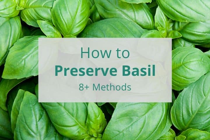How To Preserve Basil (Freeze + More)