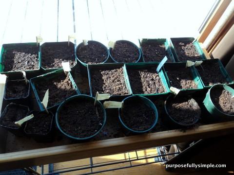 Garden Planning 2013