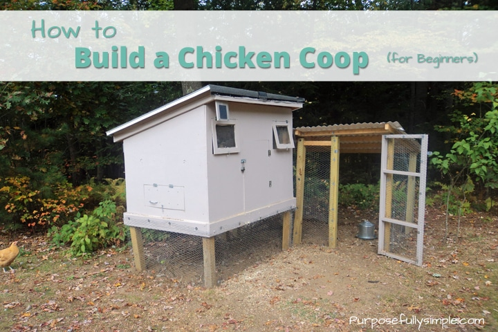 Building A Chicken House Part - 43: Learn How To Build A Chicken Coop For Beginners And Find Out How We Built  Our