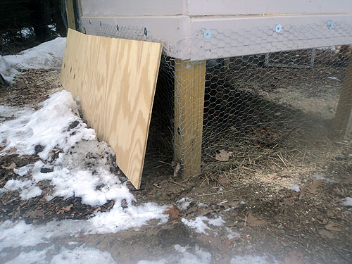Keeping Chickens in Winter: What to do to keep them healthy