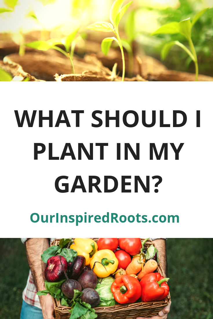 Want to grow your own food but don't know where to start? Learn what to plant in a garden and how to choose the best seeds.