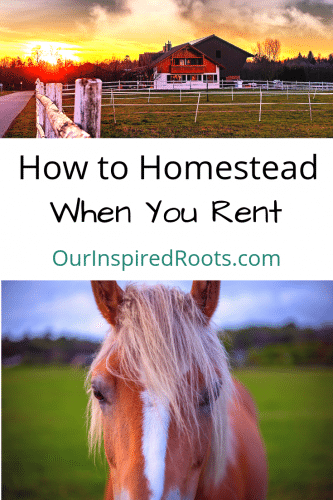 If you're not ready to buy a farm or piece of land, can you still homestead? The answer is: YES! Find out how (and why renting may be best) in this post.