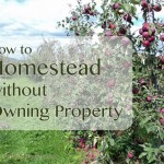 How to Homestead Without Buying Property
