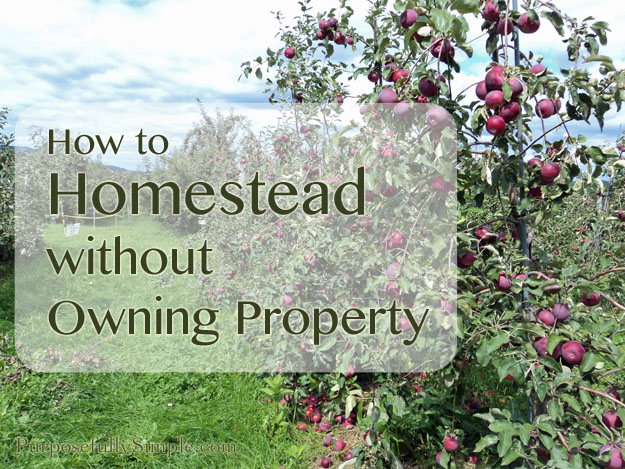 How to Homestead Without Owning Property