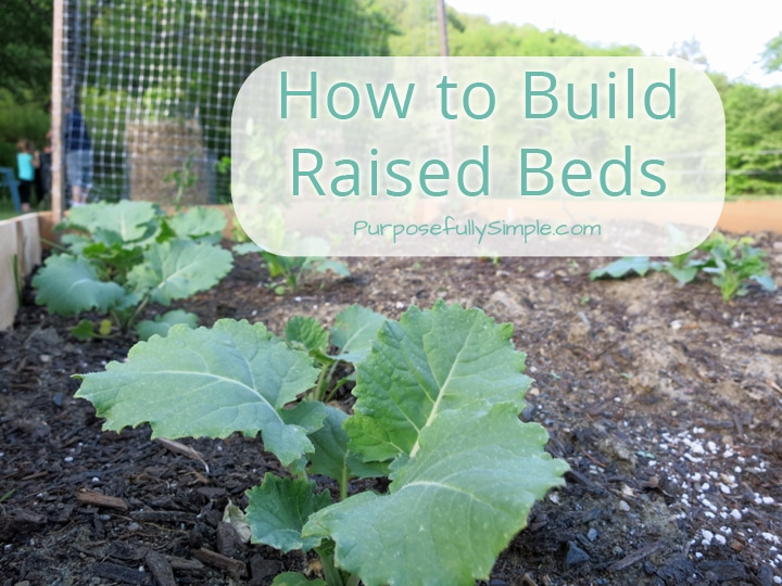 There are so many wonderful things about raised bed gardening! Learn how to build your own raised beds without spending a lot of time or money.