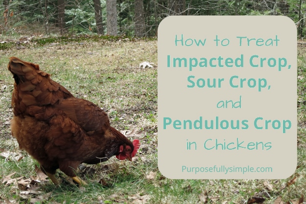 How to Treat Impacted, Sour and Pendulous Crop