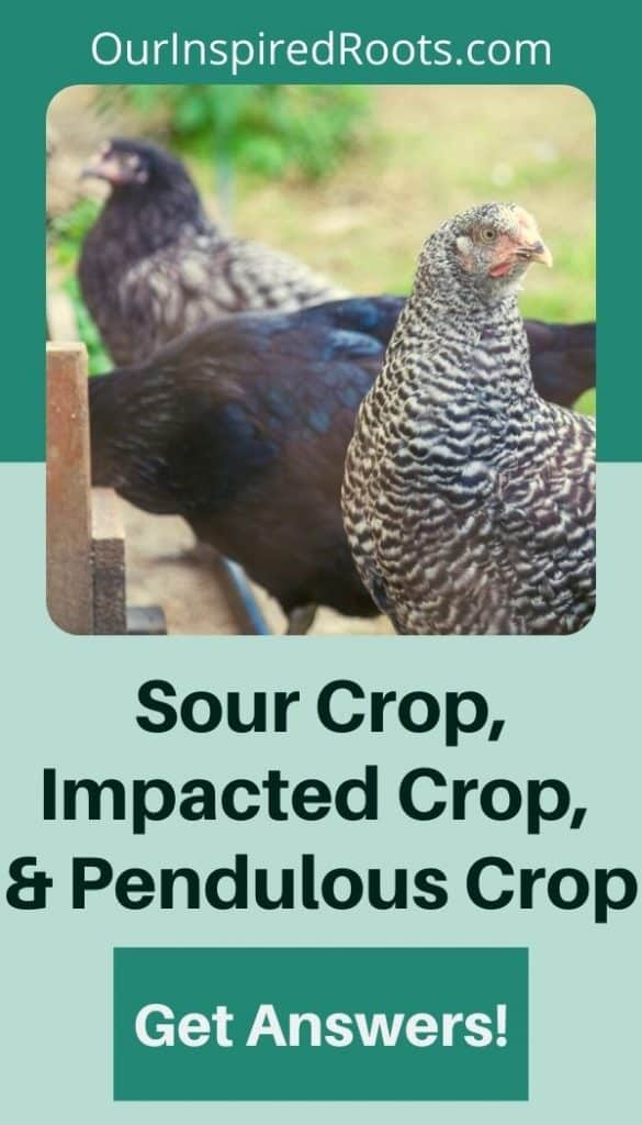 crop issues in chickens