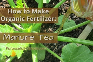 How to Make Organic Fertilizer: Manure Tea