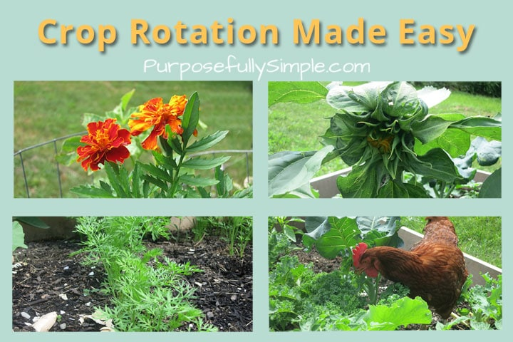 Crop Rotation Made Easy