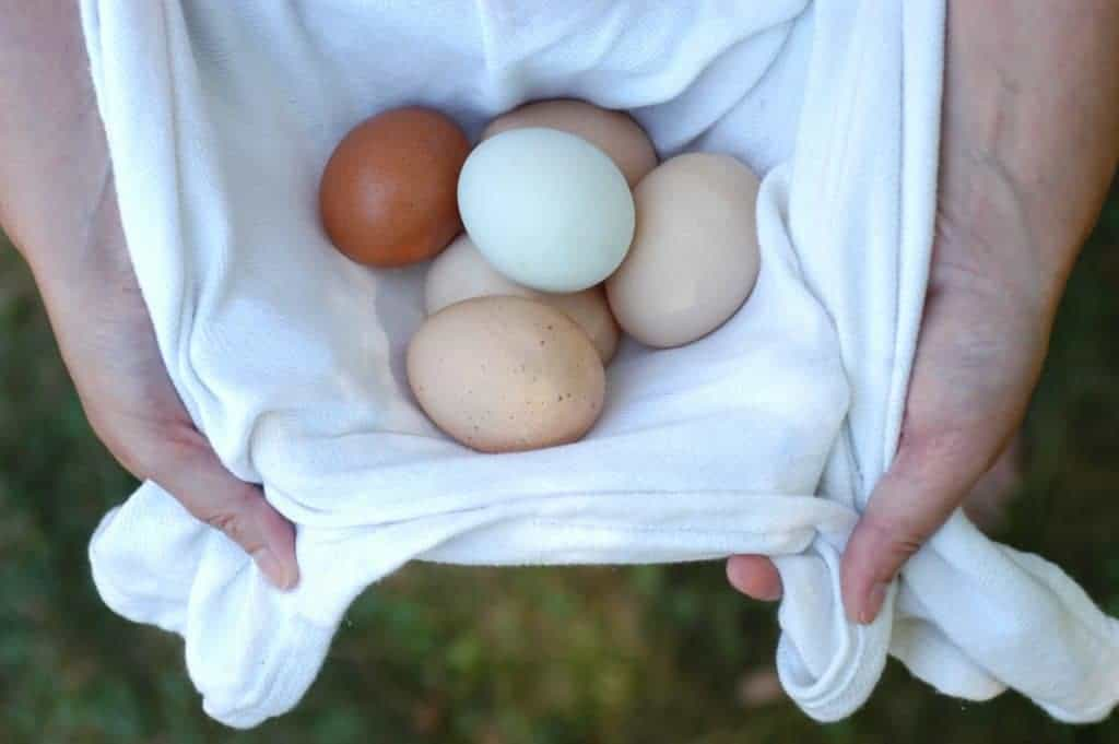 Want to start raising chickens for a steady supply of fresh eggs? Find out how to get started with these tips and simplified lists of supplies.