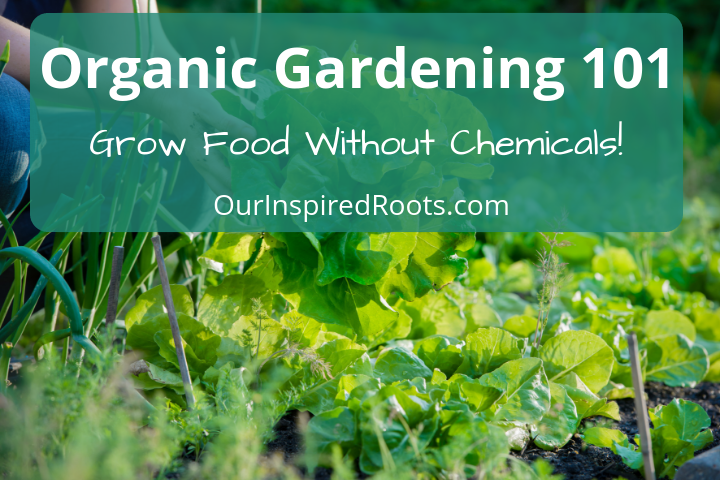 Organic Gardening 101: How to Grow Food Without Chemicals