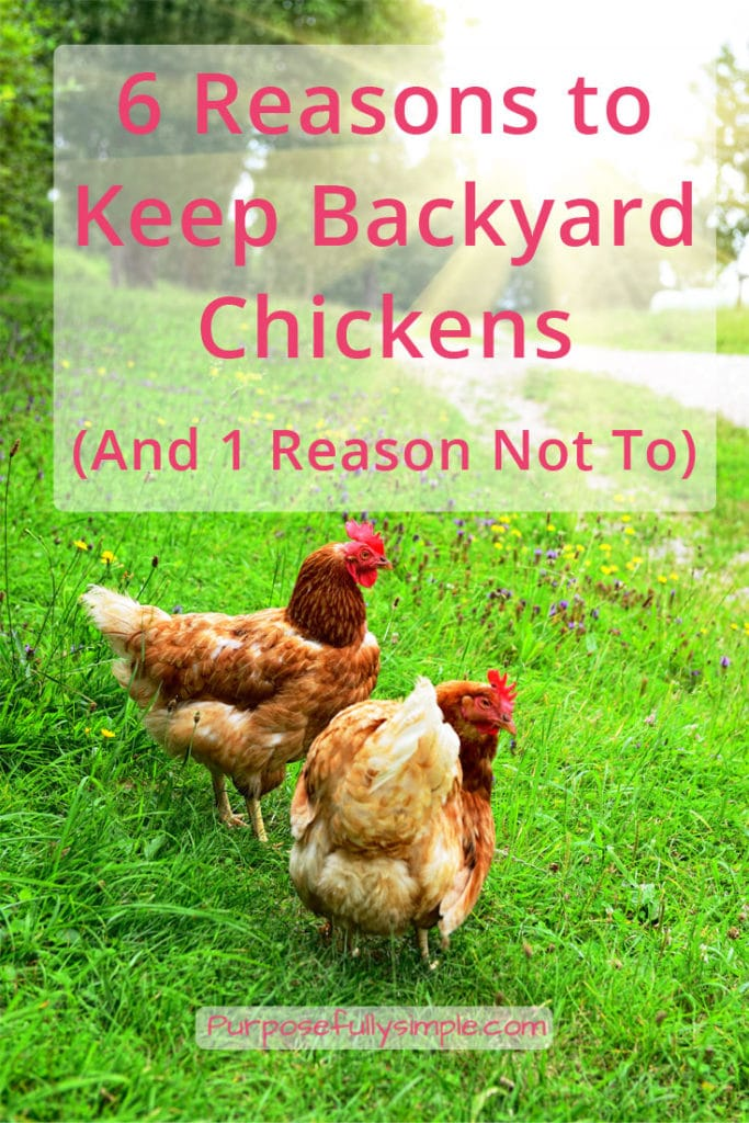 Considering backyard chickens? I can't imagine a homestead without a flock of them. Here are 6 reasons to go for it (and one reason to reconsider).