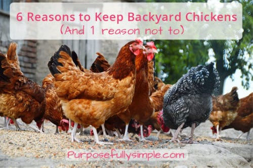 6 Reasons to Keep Backyard Chickens (And 1 Reason Not To)