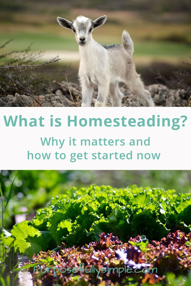 What is homesteading? It can mean a lot of different things. Find out what I think it means plus what a few of my homestead blogger friends think too.