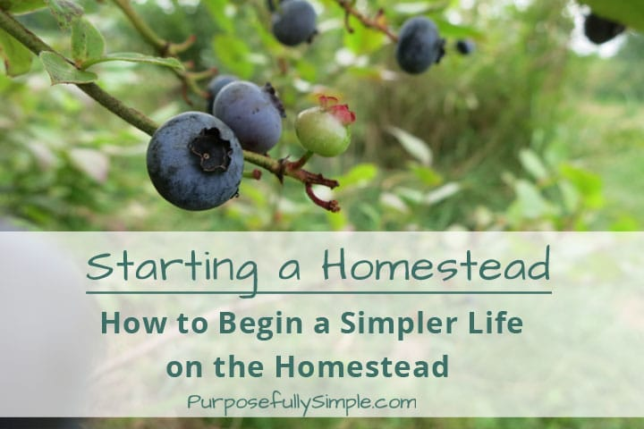 Starting a Homestead: How to Begin a Simpler Life on the Homestead
