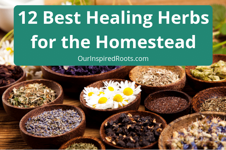 12 Best Healing Herbs for the Homestead