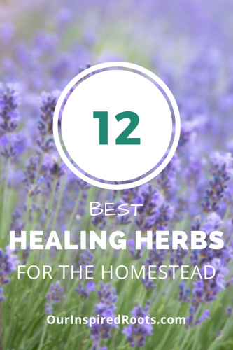 12 Best Healing Herbs for the Homestead - Our Inspired Roots