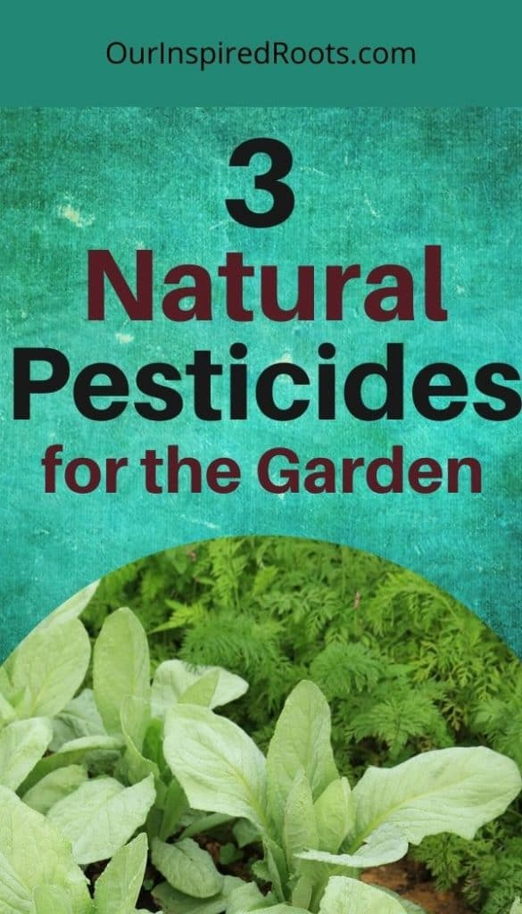 natural pesticides used in garden