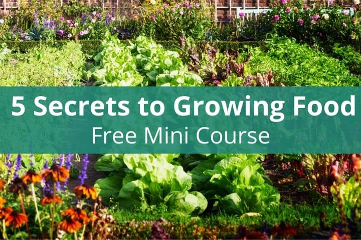 5 Secrets to Growing Food – Free  Email Course