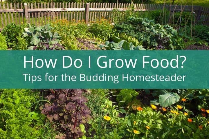 How Do I Grow My Own Food? Tips for the Budding Homesteader
