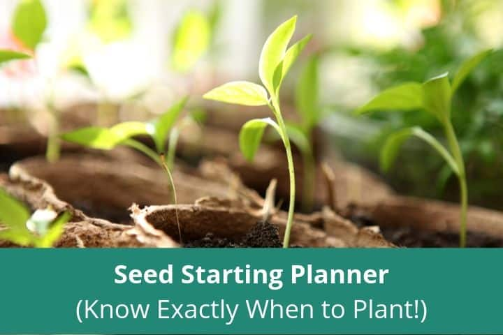 Seed Starting Planner (Know Exactly When to Plant!)