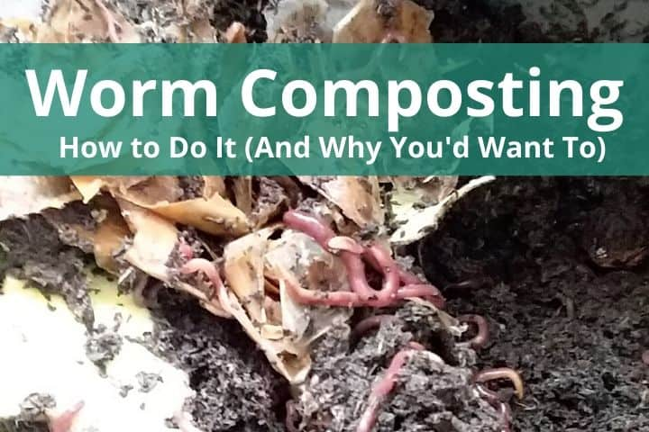 Worm Composting: How to Do It (And Why You'd Want To)