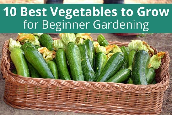 10 Best Vegetables to Grow for Beginner Gardening