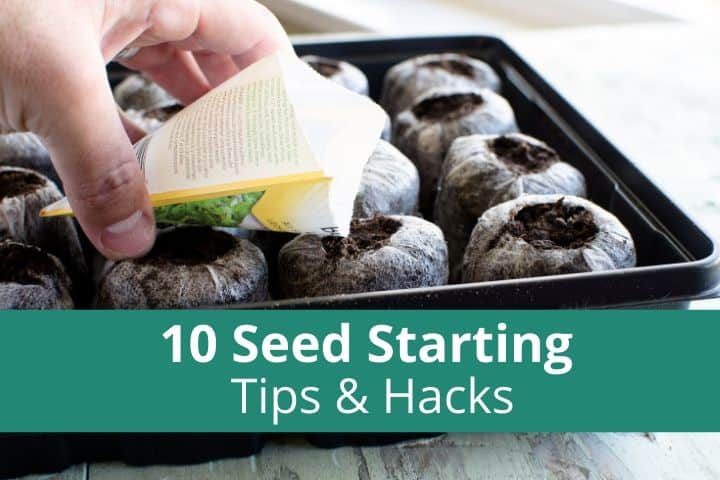 10 Seed Starting Tips & Hacks for an Easy Spring
