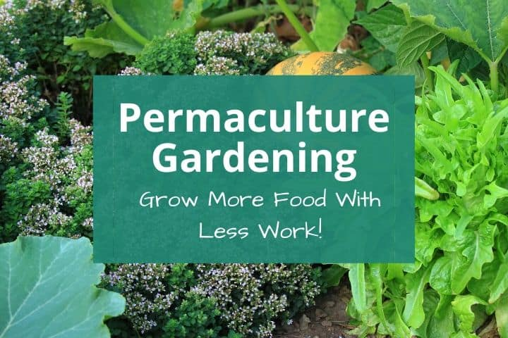 Permaculture Gardening: How to Grow More Food With Less Work