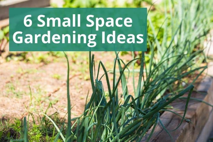 6 Small Space Gardening Tips