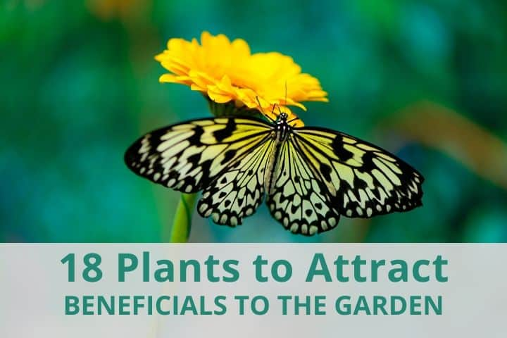 18 Best Plants to Attract Beneficial Insects to Your Garden