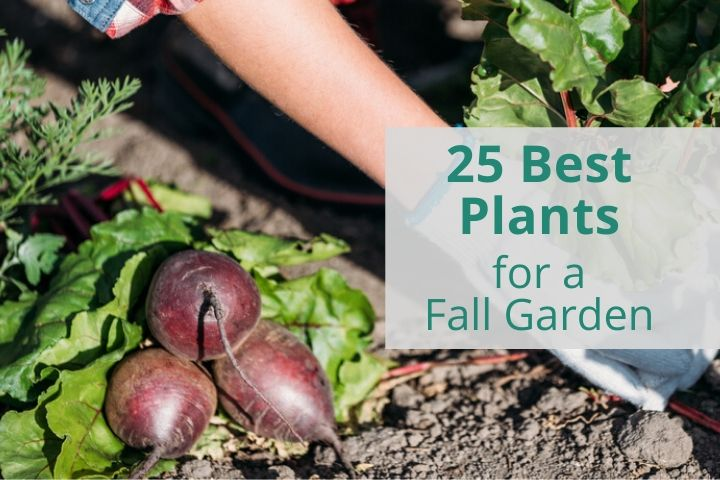 25 Best Fall Garden Plants to Start Now
