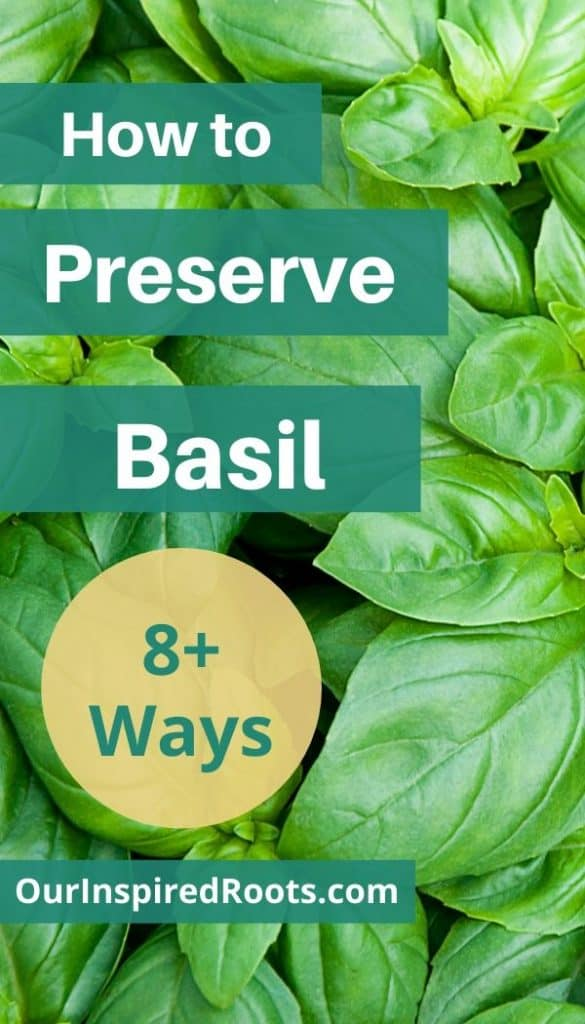 Basil grows