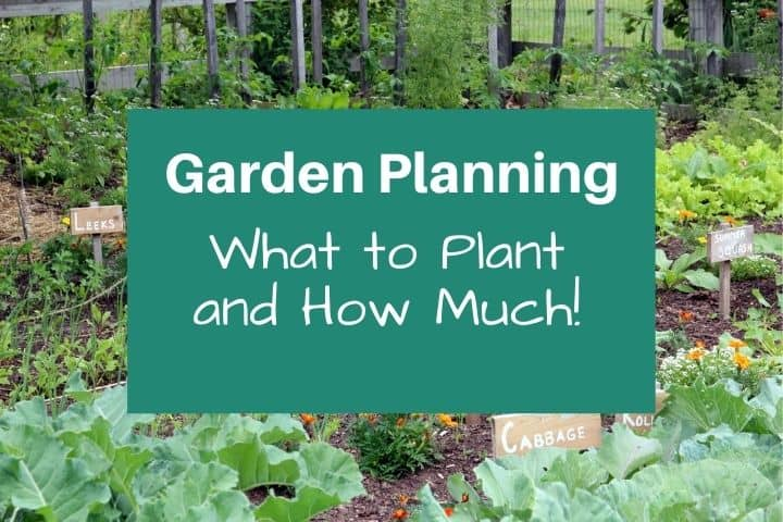How to Plan Your Garden: Learn Exactly What to Plant and How Much!