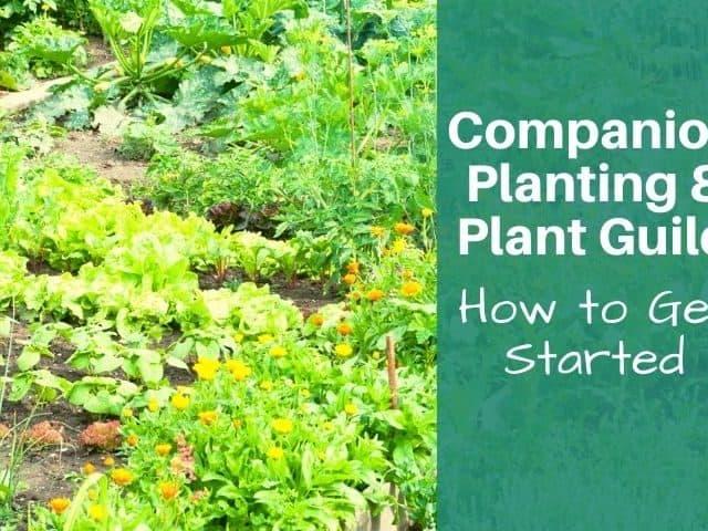 companion planting garden