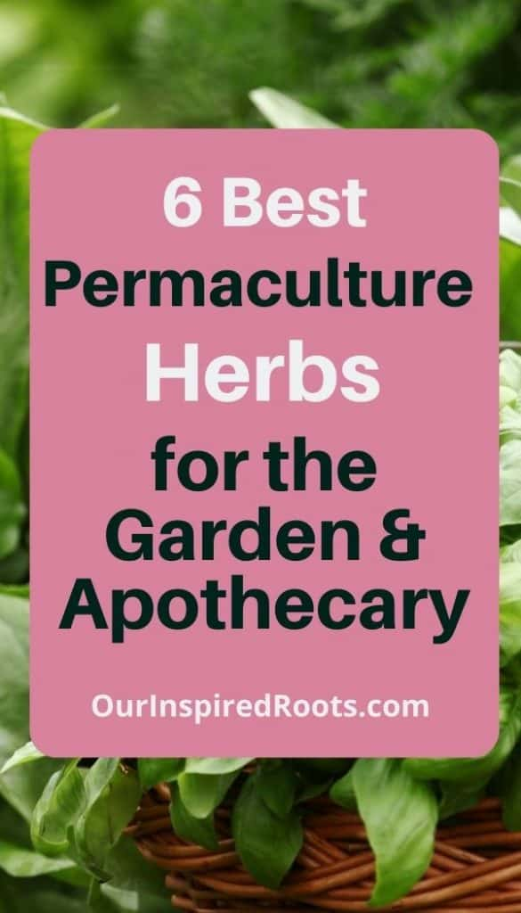 permaculture herbs growing
