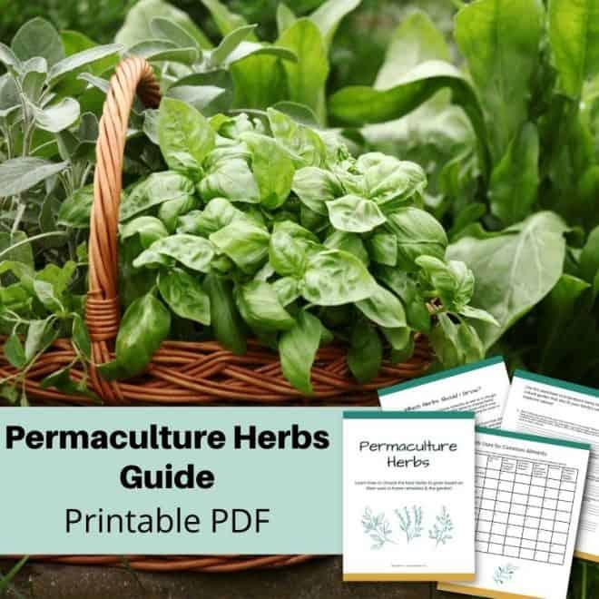 herbs growing in basket