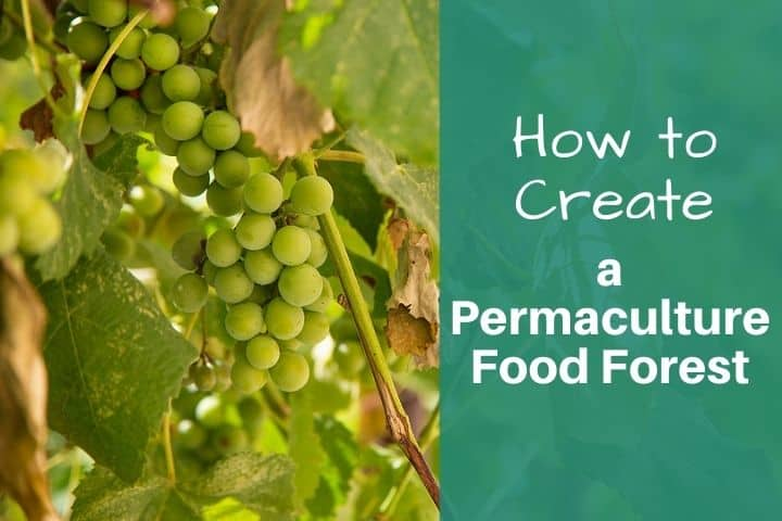 How to Create a Permaculture Food Forest or Forest Garden