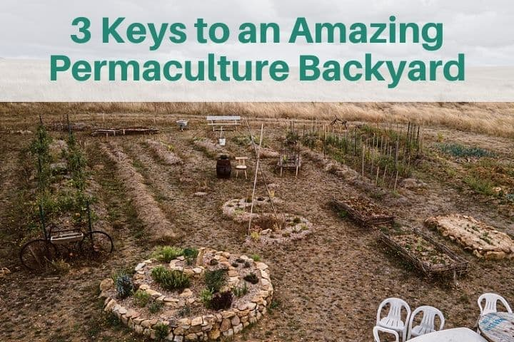 3 Keys to an Amazing Permaculture Backyard